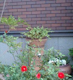 テラコッタの立水栓が我が家にぴったりで感動!DIYで好きな場所に設置可能な立水栓